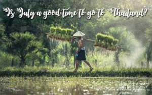 rice plantation and travel Thailand in july